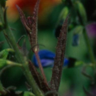 100% crop of a 6x6cm frame of Velvia 50 scanned @ 6400dpi. Unsharpened.
