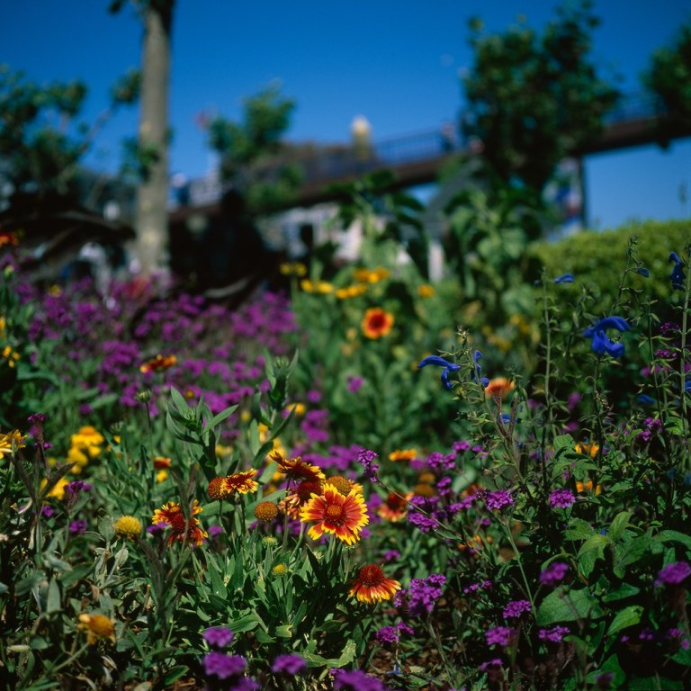 flowers_velvia_adjusted_1500